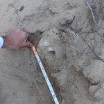 Passeggia sulla spiaggia di Badesi e trova il teschio di un bambino